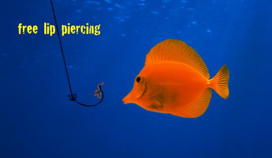 phishing karma 12 share xport pngo