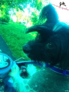 Puppy Co-Pilot
