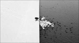 B/W birds on Russian Lake