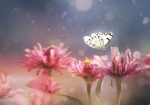 Butterfly, Lee Peiling. photobotos
