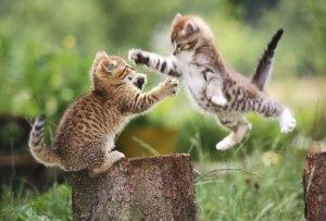 how kittens problem solve