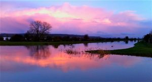 River Tone, Somerset. Alan Thorner